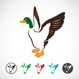Vector image of an wild duck. On white background Royalty Free Stock Photos