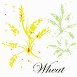 Vector image of yellow and green wheat Royalty Free Stock Photo