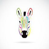 Vector image of an zebra head colorful. On white background Royalty Free Stock Image