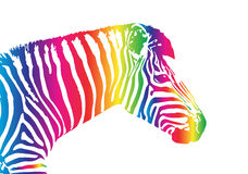 Vector image of an zebra head Stock Images