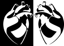 Vector a imagem do coração humano Fotos de Stock