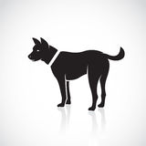 Vector images of dog. On a white background vector illustration