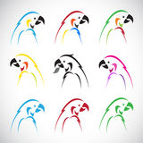 Vector images of group parrot Royalty Free Stock Images