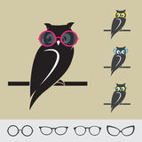 Vector images of owl and glasses Royalty Free Stock Images