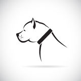 Vector images of Pitbull dog Stock Images