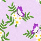 Vector inconsútil del modelo de la flor blanca y de la mariposa hermosas Imagen de archivo