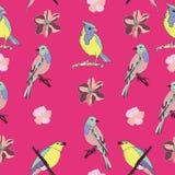 Vector inconsútil del modelo de los pájaros hermosos y coloridos Foto de archivo libre de regalías