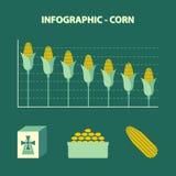 Vector infographic склоняя продукция мозоли - диаграммы информации в плоском дизайне с значком муки, шара с зернами и yello Стоковые Изображения