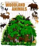 Vector infographic - bosque del arbolado con los animales ilustración del vector