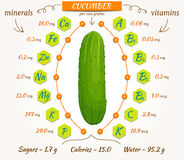 Vector infographics cucumber. Royalty Free Stock Images