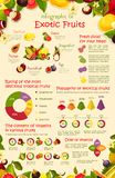Vector infographics poster tropical exotic fruits royalty free illustration