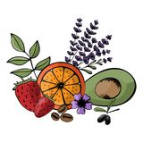 Vector, ingredients for organic, bio, eco-friendly cosmetics. na. Tural fruits and herbs. Avocado, strawberry, citrus, lavender Royalty Free Stock Photography