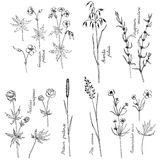 Vector ink drawing plants Stock Photography