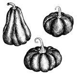 Vector ink drawing pumpkins Royalty Free Stock Image