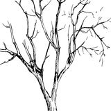 Vector ink drawing tree Stock Photos