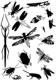 Vector of insects Royalty Free Stock Photo
