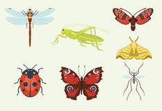 Vector insects icons isolated on background colorful top view illustration of wildlife wing fly insects detail macro vector illustration