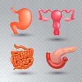 Vector internal organs realistic icon set in realistic style. Vector internal organs icon set. Realistic vector illustration vector illustration