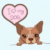 Vector Invitation with Cute Chihuahua Royalty Free Stock Images
