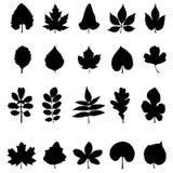 Vector inzameling van bladsilhouetten Royalty-vrije Stock Afbeelding