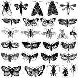 Vector inzameling van vlinder en insecten Royalty-vrije Stock Foto