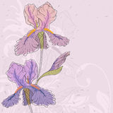 Vector iris. Hand drawn iris with fantasy flowers and plants Royalty Free Stock Photos