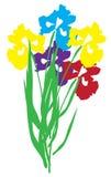 Vector Iris Flower Stock Images