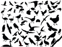 Vector of isolated birds Royalty Free Stock Photos