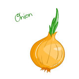 Vector isolated cartoon fresh hand drawn onion. Royalty Free Stock Image