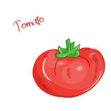 Vector isolated cartoon fresh hand drawn tomato. Royalty Free Stock Images