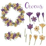 Vector card with crocuses royalty free illustration