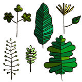 Vector Isolated Herbal Illustration with the Different Artistic Types of Green Leaves Royalty Free Stock Photos