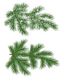Vector isolated Pine branch with snow Stock Photos