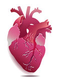 Vector Isolated Realistic Heart Illustration On White Background. Eps 10 Stock Images