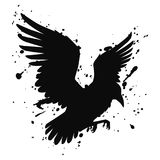 Vector isolated silhouette of a flying raven, crow. Illustration of a bird, black on white, with ink splashes Stock Photography