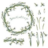 Vector isolated snowdrop on white. stock illustration