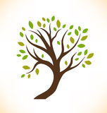 Vector isolated tree  Decorative stylized plant Royalty Free Stock Images