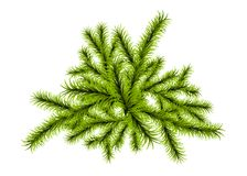Christmas tree branch template. Vector isolated white color background illustration. New year winter decoration. Christmas realistic fluffy green pine tree Royalty Free Stock Photos
