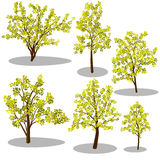 Vector isometric trees and decorative bushes stock photos