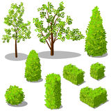 Vector isometric trees and decorative bushes royalty free stock image