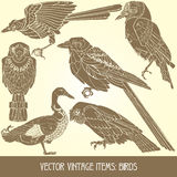 Vector Items: Birds Stock Photos