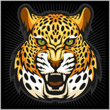 Vector jaguar portrait. Jaguars head on black background. Stock Image