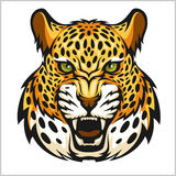Vector jaguar portrait. Jaguars head on white background. Royalty Free Stock Photo
