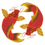Vector Japanese carp on a white background.
