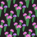 Vector Kaktus mit dem Blumenmuster, das auf dunklem Hintergrund lokalisiert wird Lizenzfreie Abbildung
