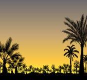 Vector Karte mit Palmeschattenbild auf tropischem Hintergrund Stockfotografie
