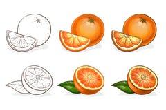 Vector, kleur en schets, smakelijke sinaasappel Stock Foto