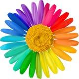 Vector kleurrijk madeliefje. Royalty-vrije Stock Foto