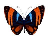 Vector kleurrijke vlinder Stock Fotografie
