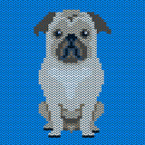 Vector knitted dog pattern.Pug-dog on blue background. Stock Photos